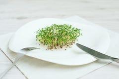 Gekeimte Startwerte für Zufallsgenerator Sprösslingssamen-Kressekopfsalat grüns stockbild