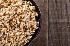 Gekeimter Weizenkeim in einer Schüsselnahaufnahme Lizenzfreie Stockbilder