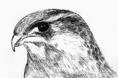 Gekenmerkte het hoofd van de adelaar vector illustratie