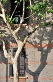Gekennzeichnete Architektur und Phoenix-Baum mit Schatten Lizenzfreies Stockbild