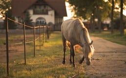 Geketend paard op het landbouwbedrijf Stock Foto's