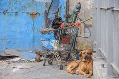 Geketende hond die dichtbij de wandelwagen met huisvuil ligt, whatchdog Stock Afbeeldingen