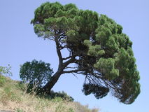 Gekippter Baum Stockfotografie