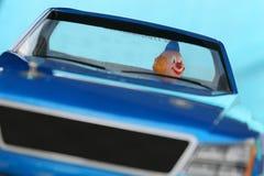 Gekke bestuurder stock afbeeldingen