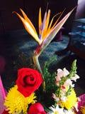 Gekke bloem Stock Afbeelding
