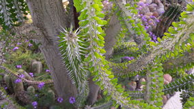 Gekke Cactus 2 Royalty-vrije Stock Afbeelding