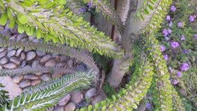 Gekke Cactus Royalty-vrije Stock Afbeeldingen