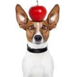 Gekke hond met grote luie ogen Royalty-vrije Stock Afbeeldingen