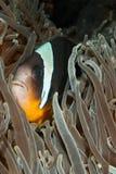 Gekke vissen Stock Afbeeldingen
