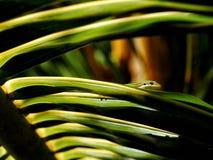 Gekko in natuurlijke habitat Stock Afbeelding