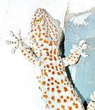 Gekko op de muur Stock Foto's
