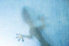 Gekko shadows. Gekko grunge textured square background stock photography