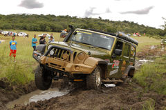 Gekkoparel Groen Jeep Wrangler Rubicon stock fotografie