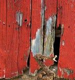 Geklapperschlange durch alte Scheune Stockbilder