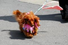 Geklede omhoog hond Stock Foto