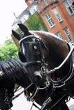 Gekleed paard royalty-vrije stock afbeelding