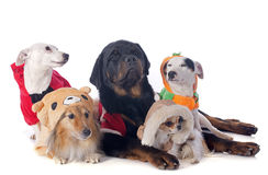 Gekleidete Hunde stockfotos
