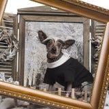 Gekleideter oben Chinese Crested-Hund in einer Winterlandschaft mit Rahmen Stockfotos