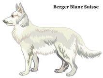 Gekleurd decoratief bevindend portret van de vectorillustratie van Berger Blanc Suisse stock illustratie
