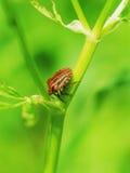 Gekleurd insect Royalty-vrije Stock Foto