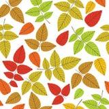 Gekleurd naadloos patroon op bladerenthema De herfst Royalty-vrije Stock Fotografie