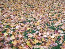 Gekleurd tapijt van gevallen bladeren Royalty-vrije Stock Afbeeldingen