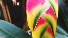 Gekleurde bladeren royalty-vrije stock afbeelding