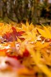 Gekleurde bladeren Stock Foto's
