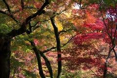 Gekleurde bladeren royalty-vrije stock foto's