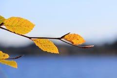 Gekleurde bladeren Stock Foto