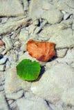 Gekleurde bladeren die op de bodem van de beek liggen Stock Fotografie
