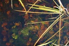 Gekleurde bladeren op de bodem van het meer Royalty-vrije Stock Foto's