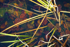 Gekleurde bladeren op de bodem van het meer Royalty-vrije Stock Fotografie