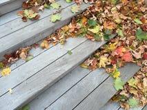 Gekleurde bladeren op treden Royalty-vrije Stock Foto's
