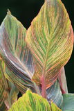 Gekleurde Bladeren van de Lente Stock Afbeelding