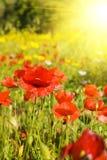 Gekleurde bloem Stock Foto