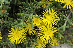 Gekleurde bloemen Stock Foto's