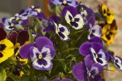 Gekleurde bloemen Royalty-vrije Stock Foto's