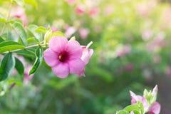 Gekleurde bloemen en natuurlijke verlichting Stock Foto
