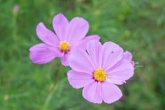 Gekleurde bloemen en natuurlijke verlichting Royalty-vrije Stock Afbeeldingen