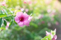 Gekleurde bloemen en natuurlijke verlichting Stock Afbeelding