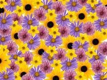 Gekleurde bloemenbloesems, collageachtergrond Stock Foto's
