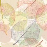 Gekleurde de herfstbladeren vector illustratie