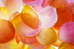 Gekleurde die bloemblaadjes op witte achtergrond worden geïsoleerd Stock Afbeeldingen