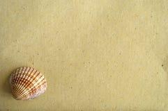 Gekleurde die zeeschelpen op een blad van geweven document worden voorgesteld royalty-vrije stock afbeelding