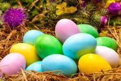 Gekleurde Eieren in Nest Stock Afbeelding