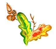 Gekleurde eiken bladeren en eikels Royalty-vrije Stock Afbeeldingen