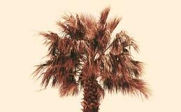 Gekleurde foto van een palm op een lichtgeele achtergrond Royalty-vrije Stock Fotografie