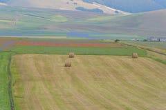 Gekleurde gebieden met balen in Piano Grande, Monti Sibillini NP, U Stock Fotografie