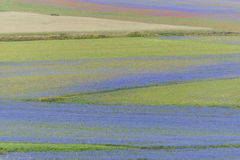 Gekleurde gebieden in Piano Grande, Monti Sibillini NP, Umbrië, Ital Stock Afbeelding